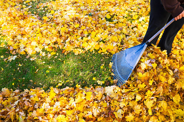 woman-raking-fall-leaves-picture-id187867594