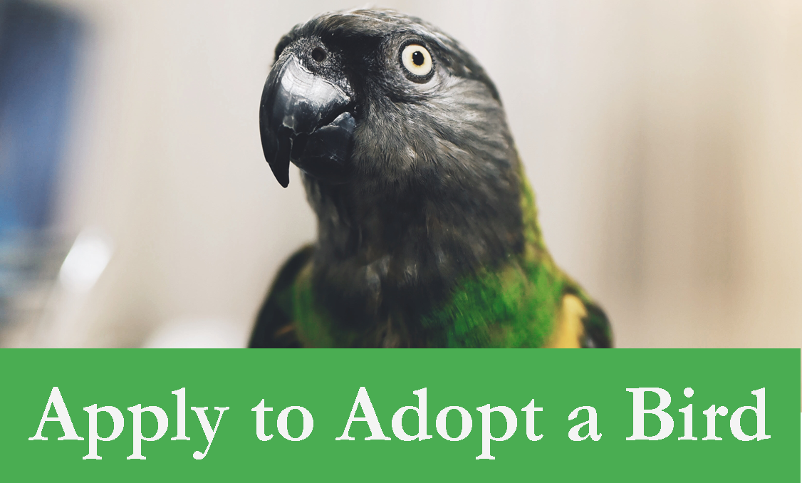 Apply to Adopt a Bird Header