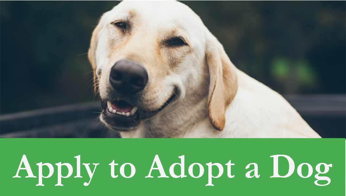 Apply to Adopt a Dog Header