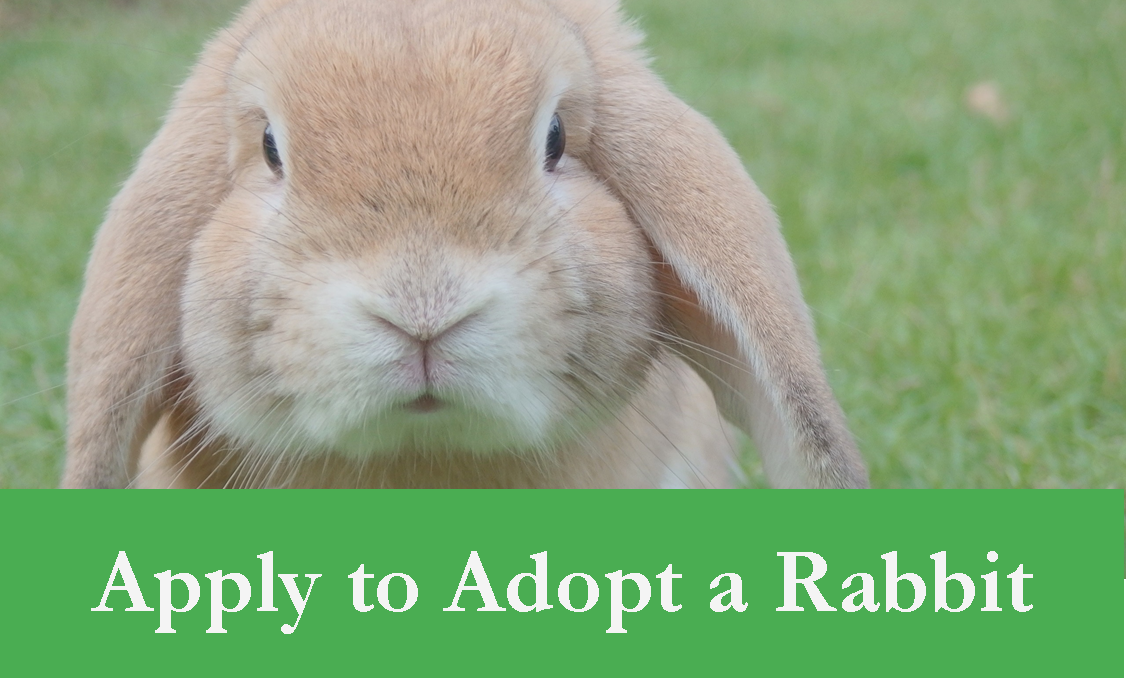 Apply to Adopt a Rabbit Header