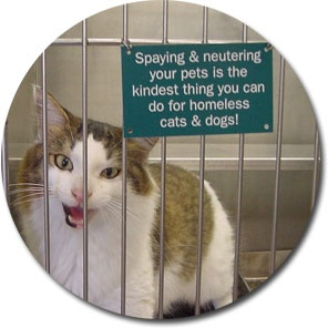 "A cat in a crate with a sign that says ""Spaying & neutering your pets is the kindest thing you can do for homeless cats & dogs!"""